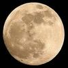 thumb_lune